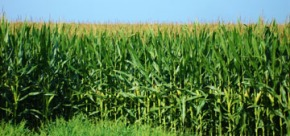 The Vital Role of County Agents inAgriculture